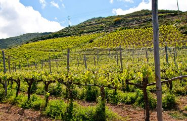 Manousakis vineyard